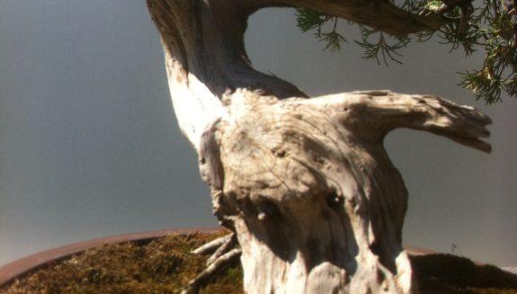 Bonsai tree base - photo by Tony Kovach