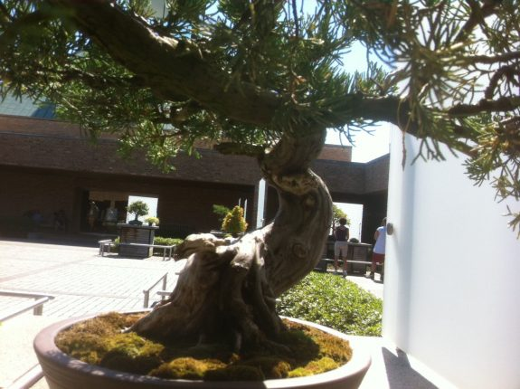base of the same bonsai tree with greenery, photo by Tony Kovach